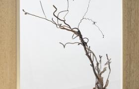 Anche le cose hanno le radici comodino, bronzo e legno, 26 x 29