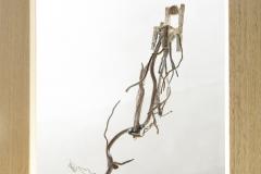 SENSI ARTE_Anche le cose hanno le radici sedia , bronzo e legno, cm 26 x 29
