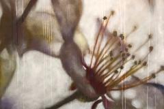 SENSI ARTE_Effetto natura viola, fiore di cappero, acrilico su tela, cm 120 x100_BRLM_23